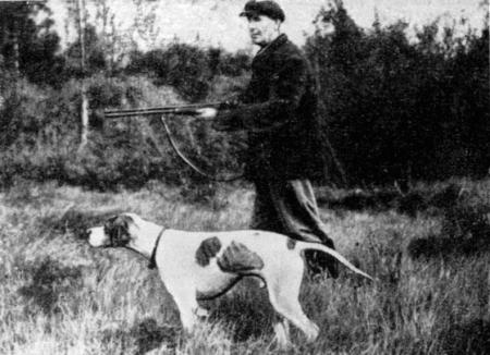 Хлыст для дрессировки собак