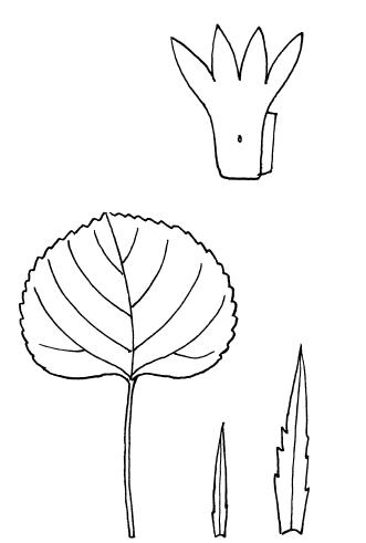 i_099.png