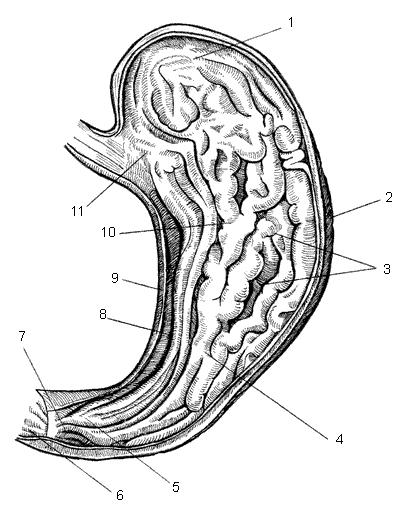 Захворювання шлунково кишкового тракту
